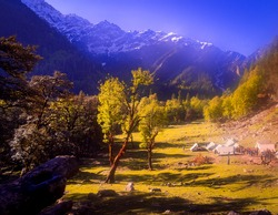 Autumn landscape in the mountains.  Beautiful camping site, landscape view of Himalayan snowscapes mountains, Sar pass trek, Kasol, Parvati valley, Himachal Pradesh, northern India.