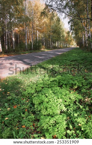 Autumn landscape in the park area. Alley strewn with yellow leaves, autumn weather, yellowed leaves, sunny weather, white clouds