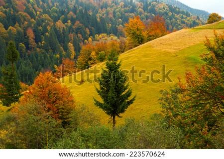 Autumn landscape in the western Ukrainian Carpathians
