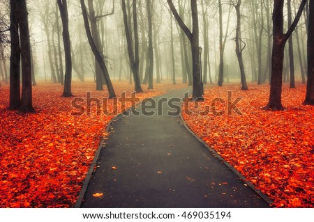 Autumn landscape - misty view of autumn park alley in dense fog - foggy autumn park with bare trees and carpet of orange dry fallen leaves on the deserted walkway receding into the distance