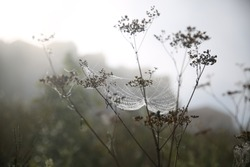 Autumn landscape. Morning, fog, cobwebs on the grass, raindrops on the cobwebs. In the background, in the fog, the outlines of houses.