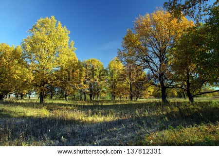 autumn landscape of oak trees and grass covered with hoarfrost morning sun lighting