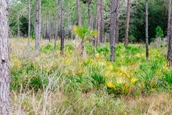 Autumn landscape of Tampa, Florida