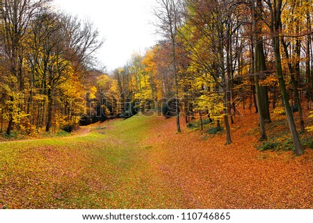 Autumn Landscape. Park in Autumn. Forest  in Autumn. Dry leaves in the foreground.
