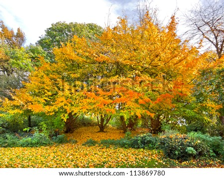 Autumn Landscape. Park in Autumn. Forest  in Autumn. Lonely beautiful autumn tree.