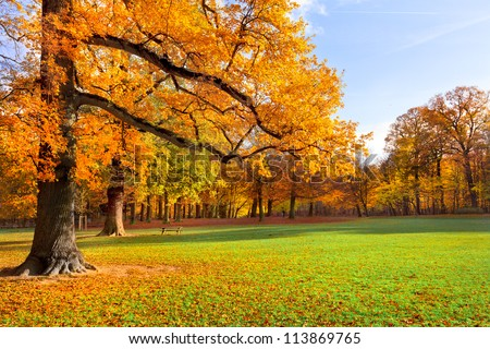 Autumn Landscape. Park in Autumn. Forest  in Autumn. Lonely beautiful autumn tree. Old tree.