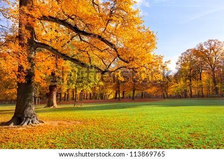 Autumn Landscape. Park in Autumn. Forest  in Autumn. Lonely beautiful autumn tree. Old tree.