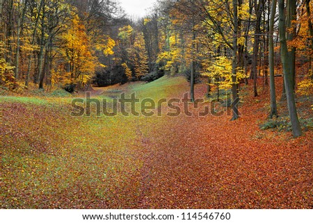 Autumn Landscape. Park in Autumn. Landscape with the autumn forest. Dry leaves in the foreground. Lonely beautiful autumn tree.