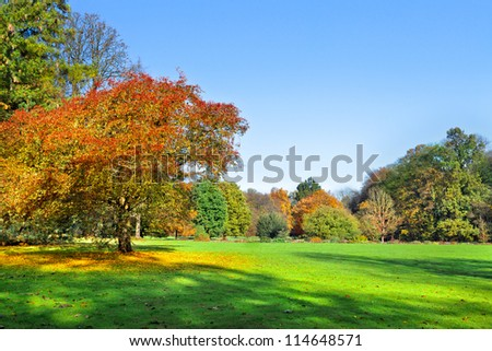 Autumn Landscape. Park in Autumn. Landscape with the autumn forest. Dry leaves in the foreground. Lonely beautiful autumn tree