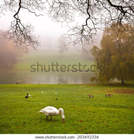 Autumn Landscape. Park in Autumn. The bright colors of autumn in the park by the lake. Fog.