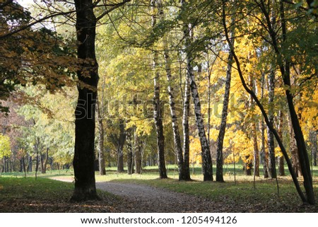 Autumn landscape. Park with trunks of birch and yellow foliage of other deciduous trees #1205494126