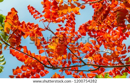 Autumn landscape photography, mountain ash in full beauty, illuminated by the colors of autumn. A tree with fruits in the form of a bunch of orange-red berries, as well as the most berries #1200754282
