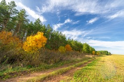 Autumn landscape photography, the European part of the Earth. Birch, oaks, linden, maples, dressed in multi-colored yellow orange-red leaves. blue sky with fluffy white clouds.