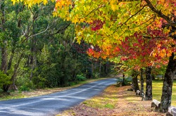Autumn landscape road with colorful trees on sunny day. Bright and vivid autumn foliage with country road on the background.