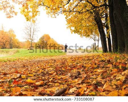 Autumn landscape. The natural background. #733108087