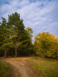 Autumn landscape - trail by a pine grove and trees with yellowing leaves