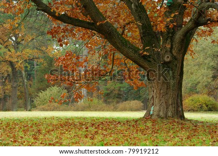Autumn Landscape, trees covered with yellow leaves, falling leaves, oak