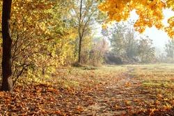 Autumn landscape. Trees, grass, trail, fog, hoarfrost, leaves, water, sunlight, sky.