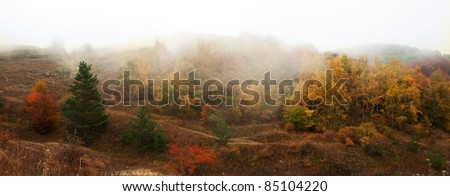 Autumn Landscape. Trees with yellow leaves in a fog