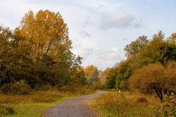 Autumn landscape view of nature path with colourful yellow orange leaves, Recreation and nature area in Amsterdam Nieuw-West, Located north of the Nieuwe Meer, Oeverlanden Park, Netherlands.