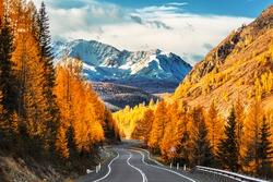 Autumn landscape. View of the Chui tract, autumn taiga, north Chuysky ridge, snow-capped mountain peaks. Altai Republic, Russia