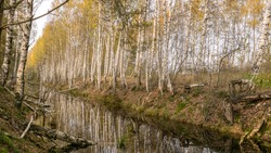 autumn landscape with a bog ditch, colorful trees on the side of the ditch, white birch trunks and yellow leaves reflected in the water of a dark bog ditch, Seda moor, Seda, Latvia