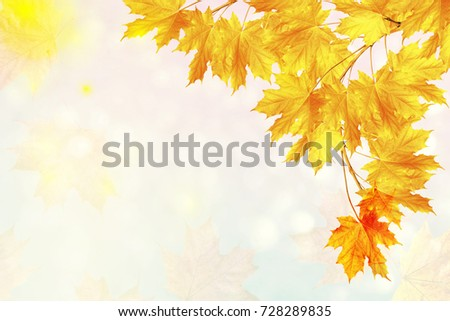autumn landscape with bright colorful leaves. Indian summer. #728289835