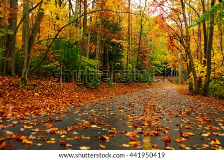 Autumn landscape with bright colorful orange and red trees and leaves in west virginia #441950419