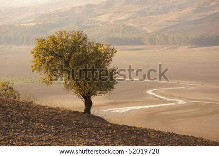 autumn landscape with lonely tree and a course of water in a dry lake
