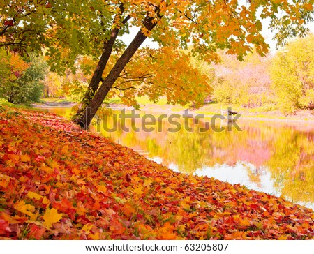 Autumn landscape with maples and water surface