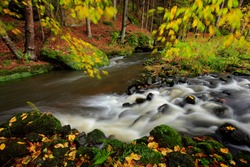 Autumn landscape with orange and yellow leaves in the water, big rock in the background, Kamenice river, in czech national park, Ceske Svycarsko, Bohemian Switzerland park in the Czech Republic.