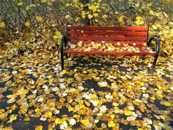Autumn Landscape With Red Bench In The Yellow Leaves Background. Red Bench In The  Park.  Autumn Carpet With Yellow Leaves.