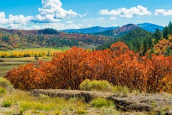 Autumn landscape with red leaved trees and blue sky