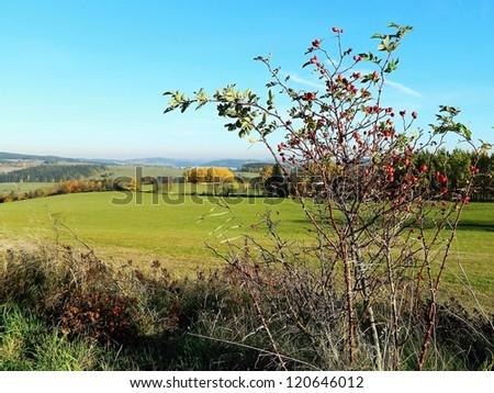 Autumn landscape with rose bush - stock photo