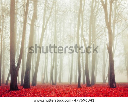 Autumn landscape with tall bare trees and red dry fallen leaves covering the ground