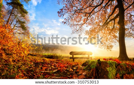 Autumn landscape with the sun warmly illumining a bench under a tree, lots of gold leaves and blue sky