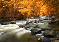 Autumn landscape with trees and river