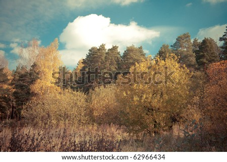 Autumn landscape with trees and sky. Toned image