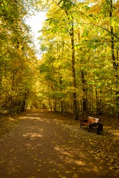 Autumn Landscape With Wooden Bench By Road With Leaf Fall In Colorful Park.