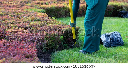 autumn landscaping work in the park. The gardener takes care of the plants. Seasonal gardening, landscape design. Stock photo ©