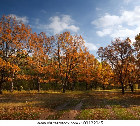 Autumn lanscape with oak grove in september - stock photo