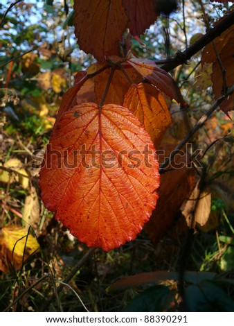 autumn leaf, autumn leaves,