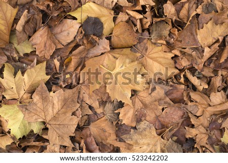 Autumn Leaf Background #523242202