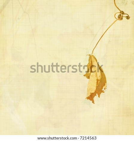 autumn leaf BG