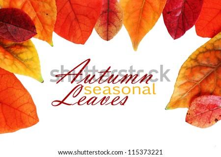 Autumn Leaf Border #115373221