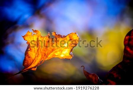 Autumn leaf close up view. Autumn leaf. Autumn leaf fall. Autumn lef view