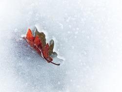 Autumn leaf frozen in the ice, horizontal orientation