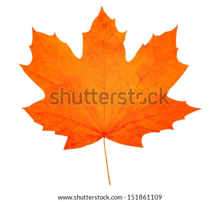 Stock Photo Autumn leaf. High quality.