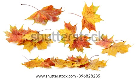 Stock Photo Autumn leaf isolated on a white, collage
