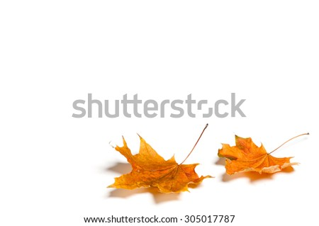 Autumn leaf isolated on white background. #305017787